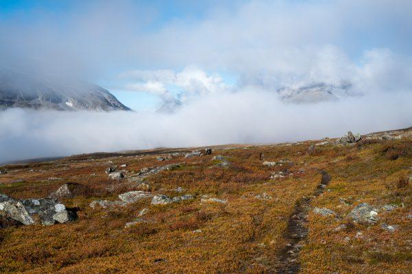 Mist in Rapadalen
