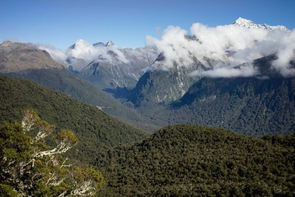 View into Hollyford Valley