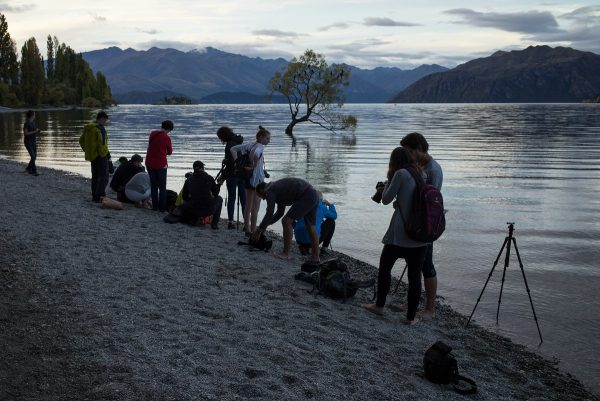 Photographers gathered at the Wanaka tree