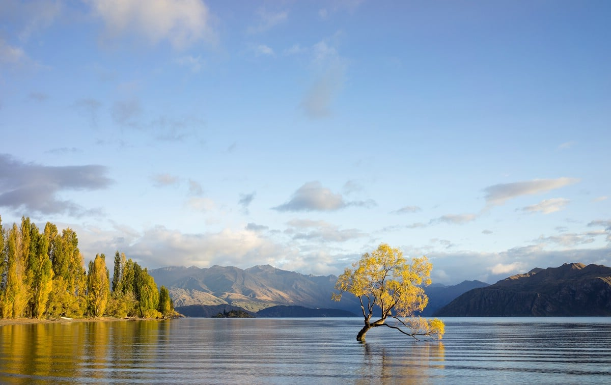 """The"" Wanaka Tree"