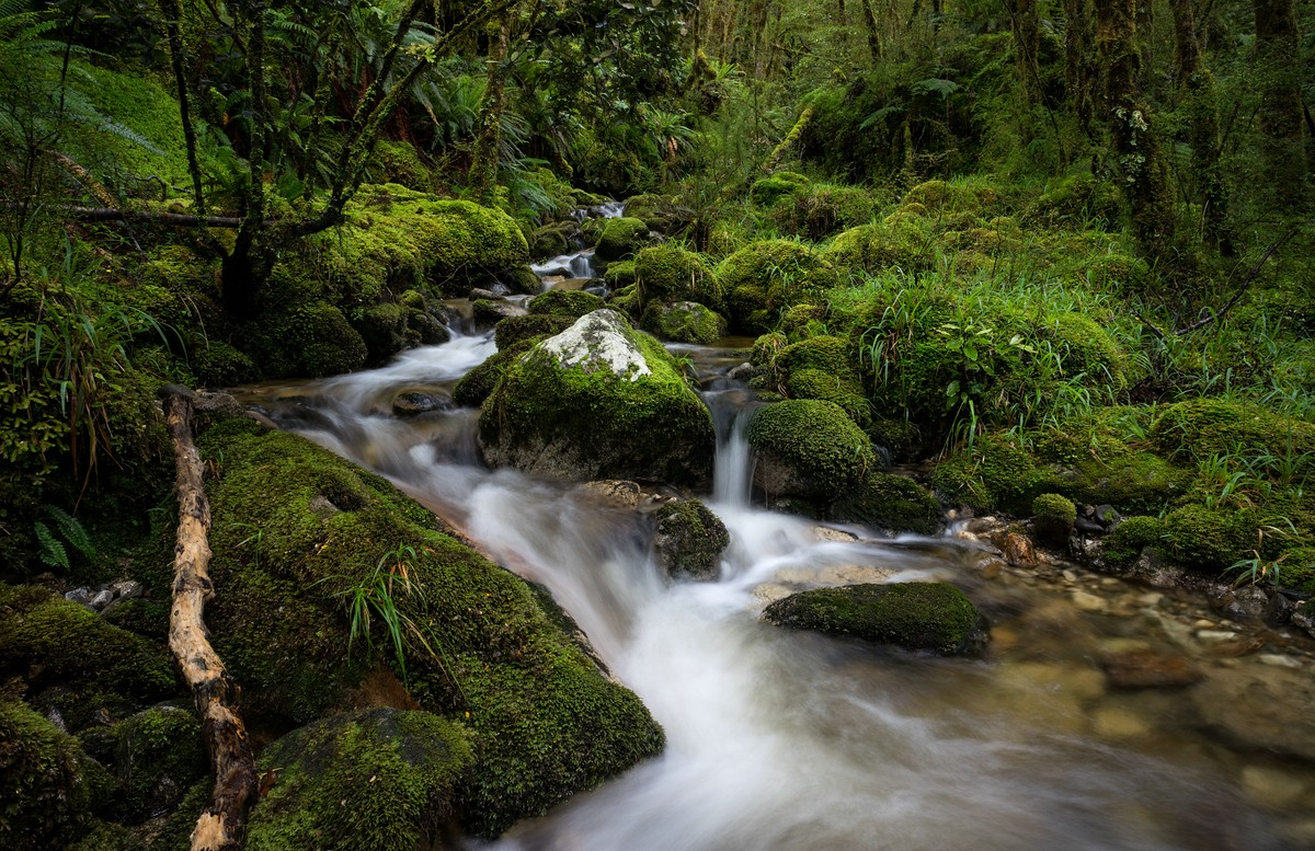 A small stream in the forest
