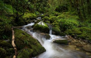 Small stream in the rainforest