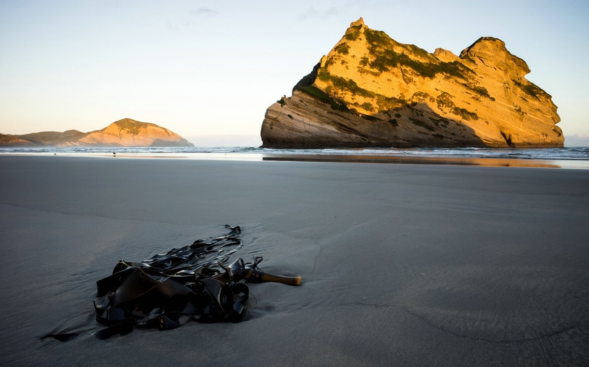 Wharariki Beach (West Coast) II